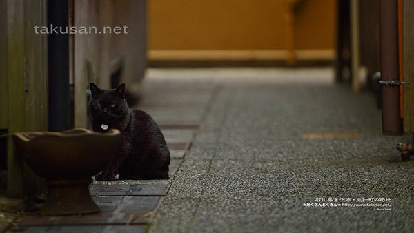 主計町の路地の猫