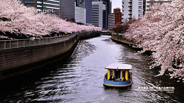 目黒川大崎付近の桜