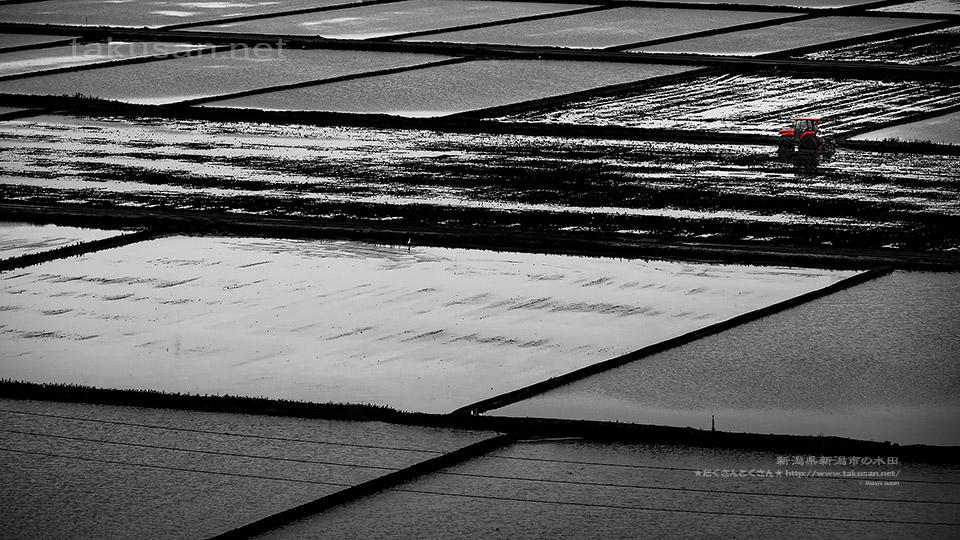 新潟の水田