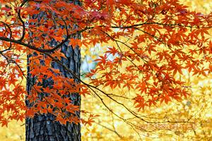新宿御苑の紅葉 デスクトップ壁紙